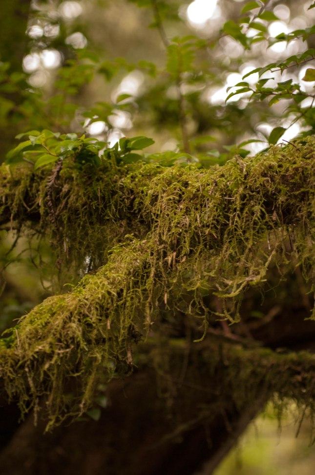 ZAJ_2150Trees of Mystery