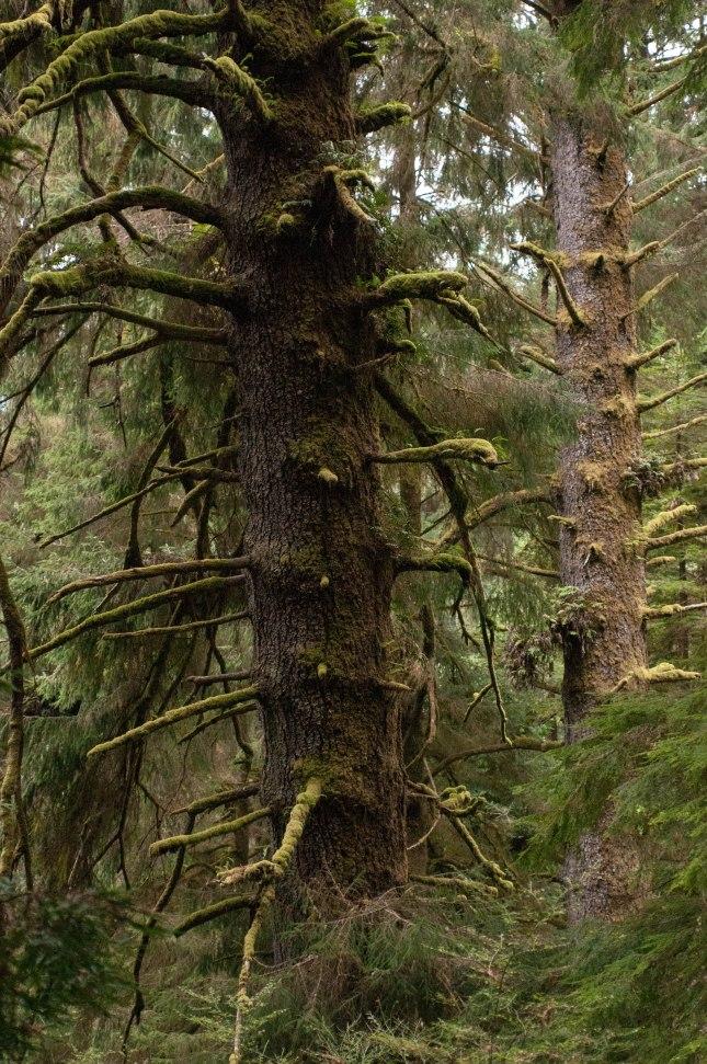 ZAJ_2170Trees of Mystery