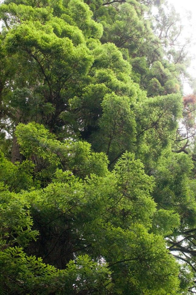 ZAJ_2183Trees of Mystery