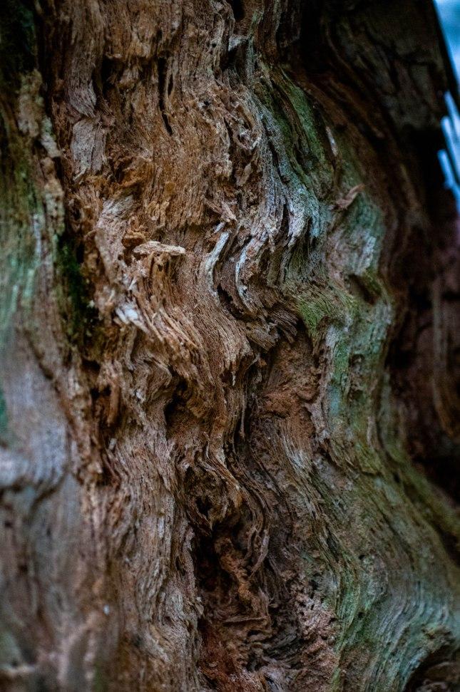 ZAJ_2220Trees of Mystery